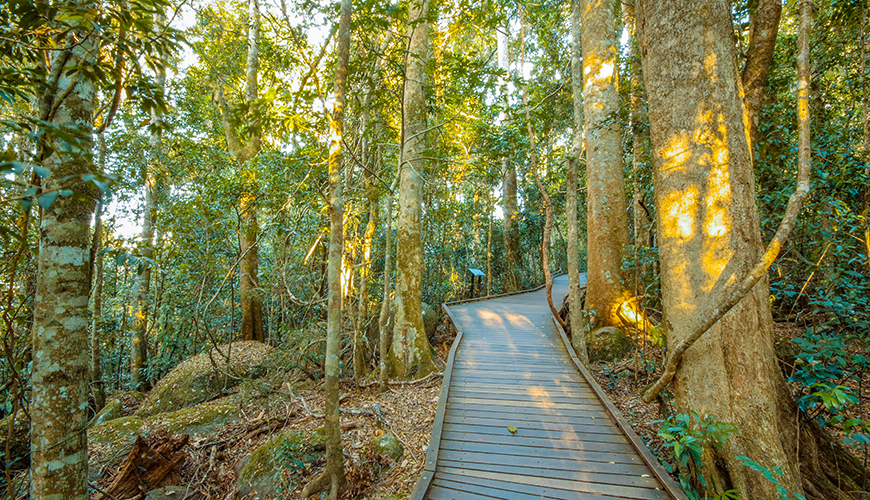 Boardwalk path in forest